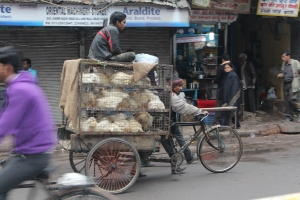 Fast food: chicken transportation.